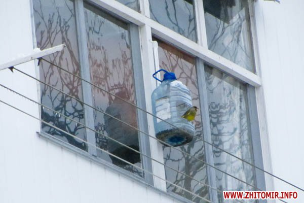 Кормушки для птиц своими руками на балконах 62