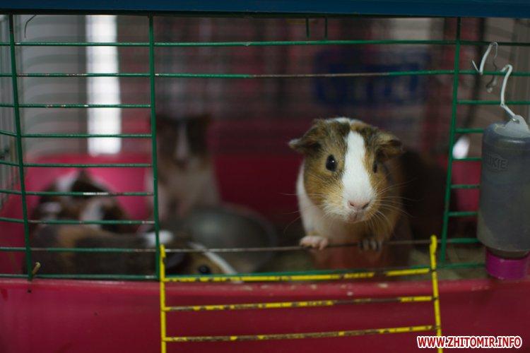 Зоомагазин морские свинки москва