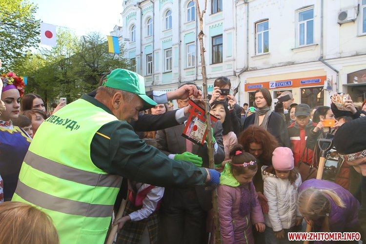 sakyri posad 15 - Начальник житомирського КП «Зеленбуд» розповів, куди з сакур зникли таблички з хоку
