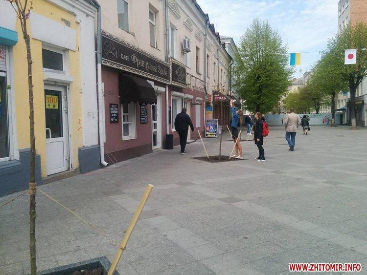 saruku m 1 - Начальник житомирського КП «Зеленбуд» розповів, куди з сакур зникли таблички з хоку