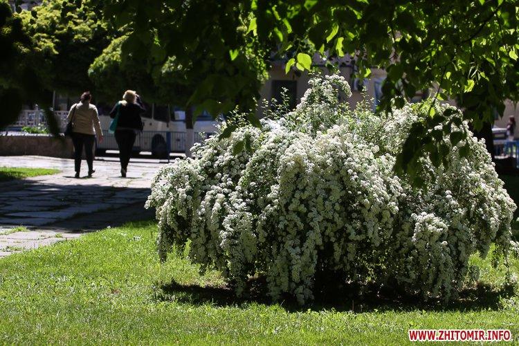 20170522 summerbeginning 04 - 10 днів до початку літа у Житомирі. Фоторепортаж