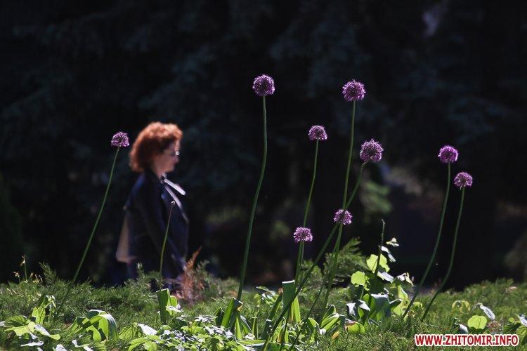 20170522 summerbeginning 26 - 10 днів до початку літа у Житомирі. Фоторепортаж