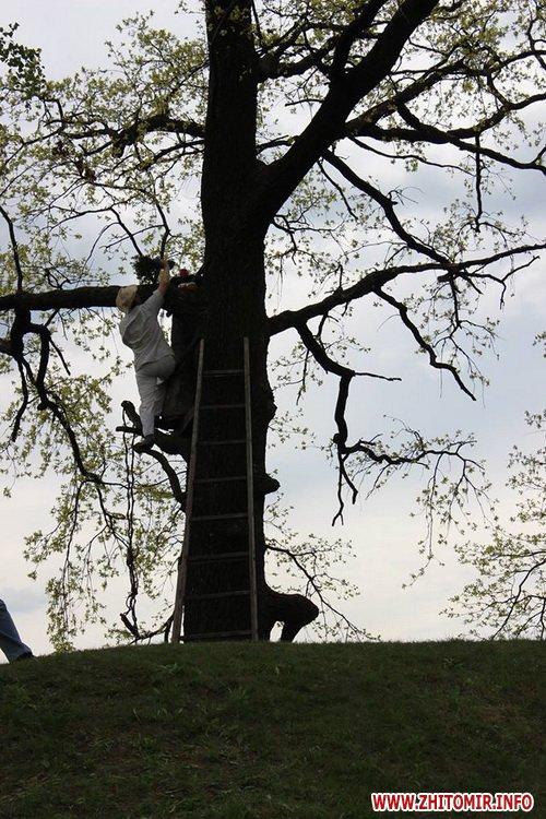 oceZ 20 - На Бабиній горі в Олевську відтворили прадавні обряди древлян: варили мед та водили хороводи