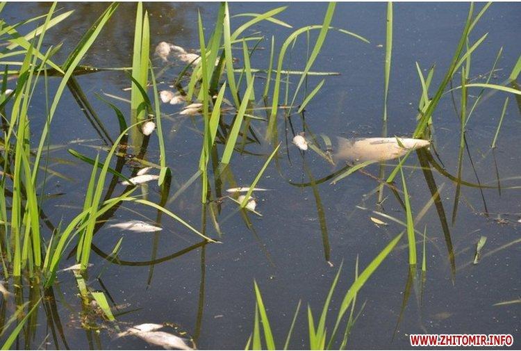 fabrina 2 - В одному з районів Житомирської області людям заборонили використовувати воду з річок