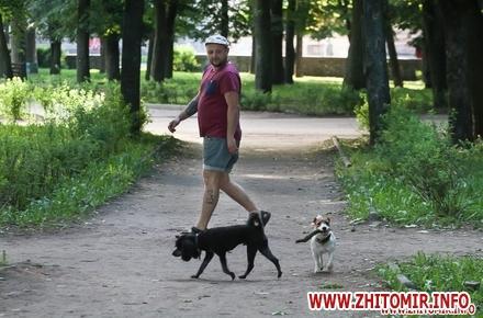 2017 06 02Vigyl sobak 18 w440 h290 - Яких собак вигулюють зранку житомиряни на Крошні, в сквері та парку. Фоторепортаж