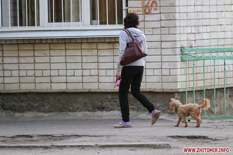 Vigyl sobak 01 - Яких собак вигулюють зранку житомиряни на Крошні, в сквері та парку. Фоторепортаж