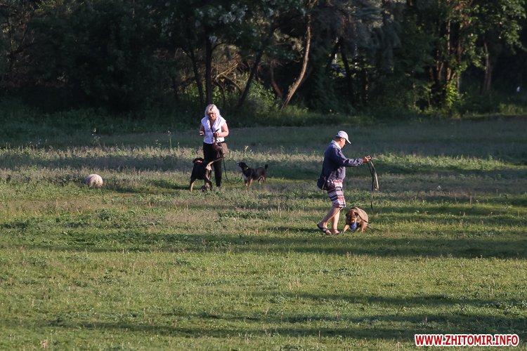 Vigyl sobak 02 - Яких собак вигулюють зранку житомиряни на Крошні, в сквері та парку. Фоторепортаж
