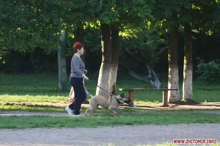 Vigyl sobak 03 - Яких собак вигулюють зранку житомиряни на Крошні, в сквері та парку. Фоторепортаж