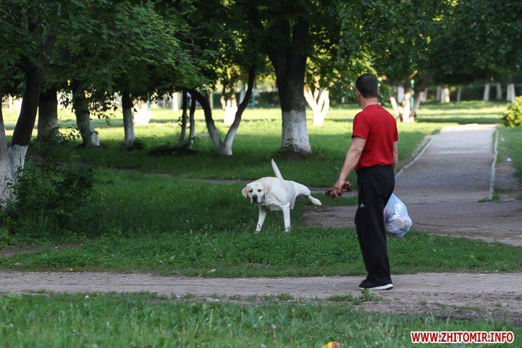 Vigyl sobak 04 - Яких собак вигулюють зранку житомиряни на Крошні, в сквері та парку. Фоторепортаж