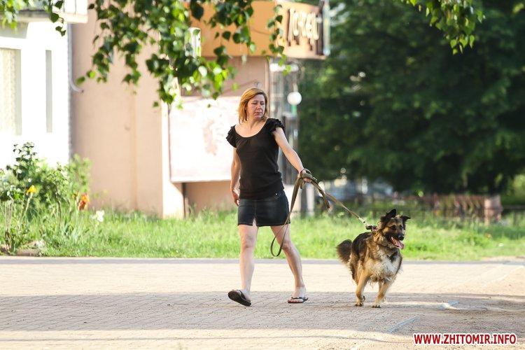 Vigyl sobak 05 - Яких собак вигулюють зранку житомиряни на Крошні, в сквері та парку. Фоторепортаж