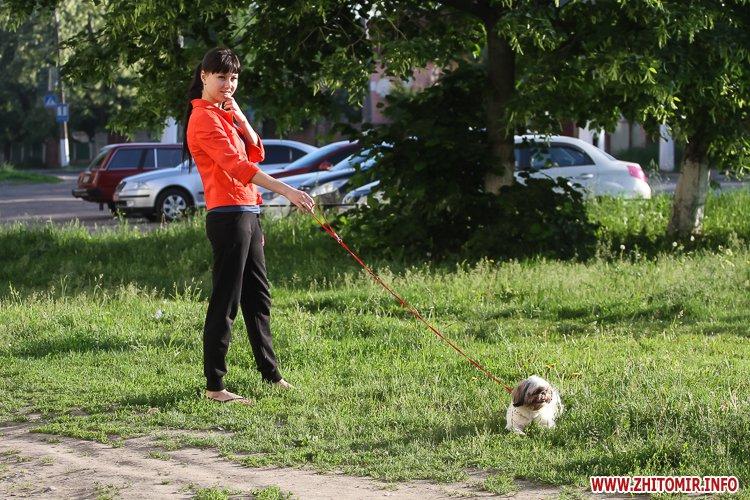 Vigyl sobak 06 - Яких собак вигулюють зранку житомиряни на Крошні, в сквері та парку. Фоторепортаж