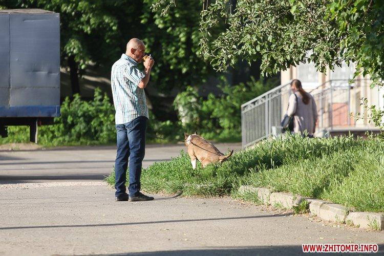 Vigyl sobak 09 - Яких собак вигулюють зранку житомиряни на Крошні, в сквері та парку. Фоторепортаж