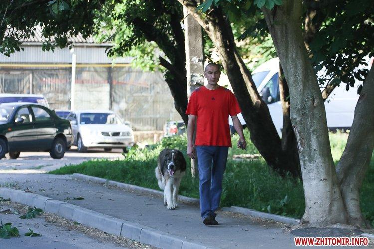 Vigyl sobak 10 - Яких собак вигулюють зранку житомиряни на Крошні, в сквері та парку. Фоторепортаж