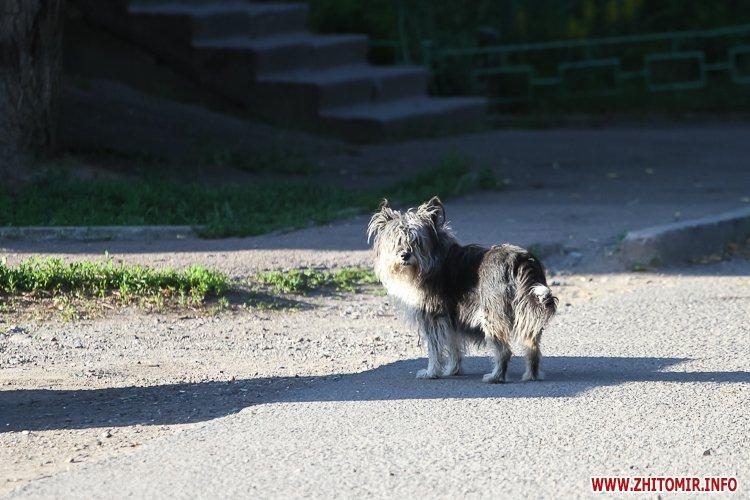 Vigyl sobak 11 - Яких собак вигулюють зранку житомиряни на Крошні, в сквері та парку. Фоторепортаж