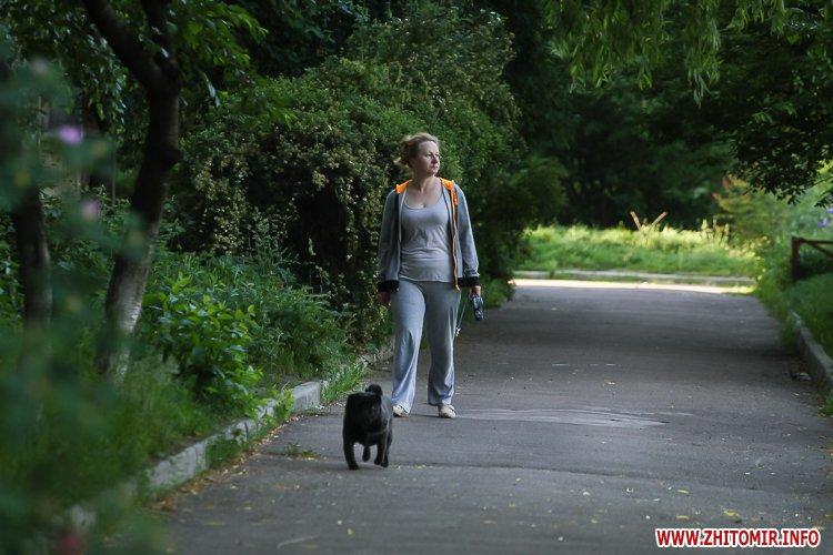 Vigyl sobak 12 - Яких собак вигулюють зранку житомиряни на Крошні, в сквері та парку. Фоторепортаж