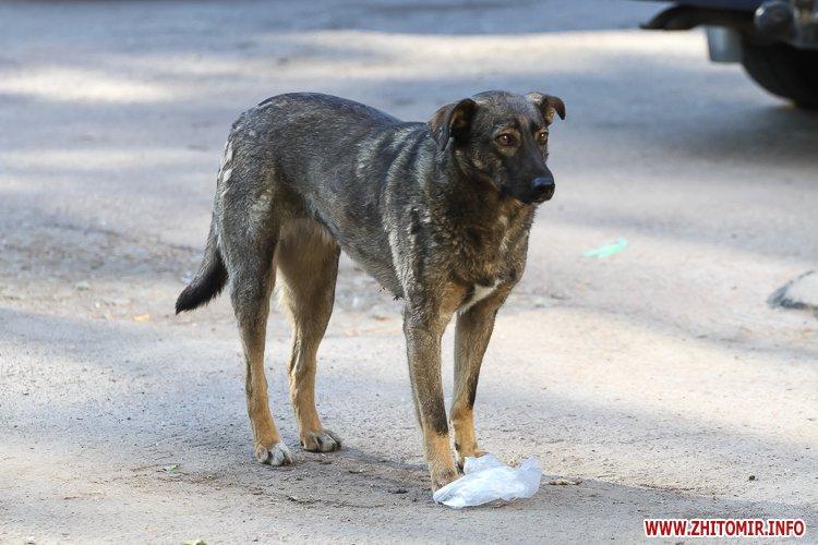 Vigyl sobak 13 - Яких собак вигулюють зранку житомиряни на Крошні, в сквері та парку. Фоторепортаж