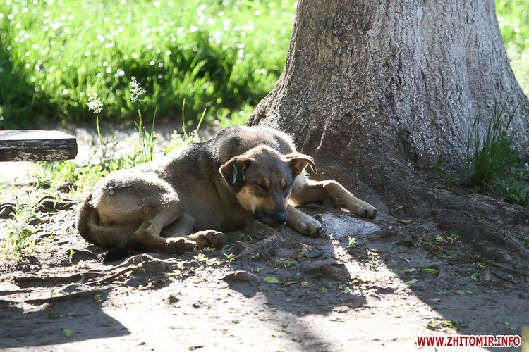Vigyl sobak 14 - Яких собак вигулюють зранку житомиряни на Крошні, в сквері та парку. Фоторепортаж