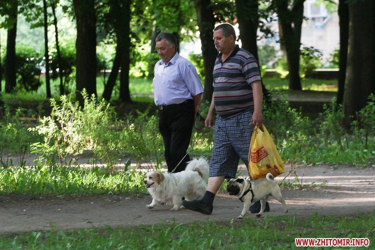 Vigyl sobak 15 - Яких собак вигулюють зранку житомиряни на Крошні, в сквері та парку. Фоторепортаж