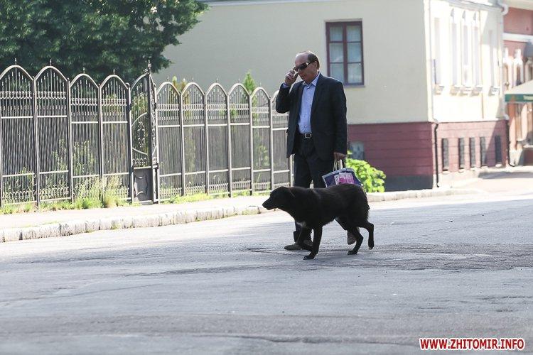 Vigyl sobak 16 - Яких собак вигулюють зранку житомиряни на Крошні, в сквері та парку. Фоторепортаж
