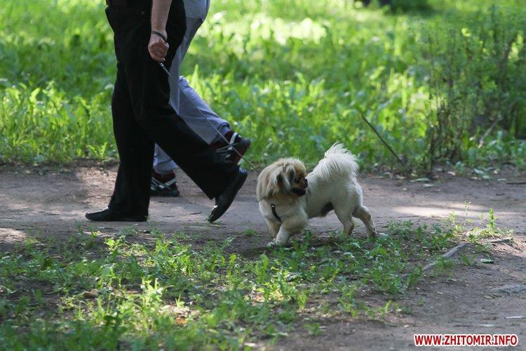 Vigyl sobak 17 - Яких собак вигулюють зранку житомиряни на Крошні, в сквері та парку. Фоторепортаж
