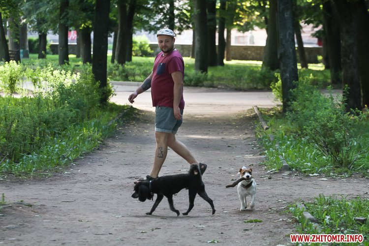 Vigyl sobak 18 - Яких собак вигулюють зранку житомиряни на Крошні, в сквері та парку. Фоторепортаж