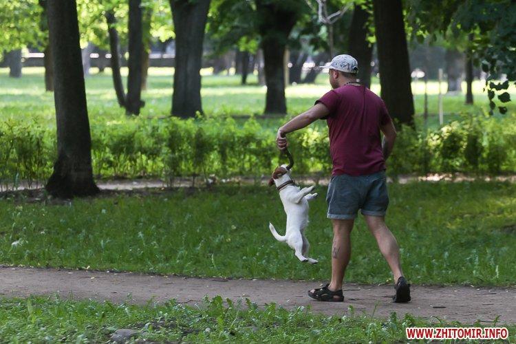 Vigyl sobak 19 - Яких собак вигулюють зранку житомиряни на Крошні, в сквері та парку. Фоторепортаж