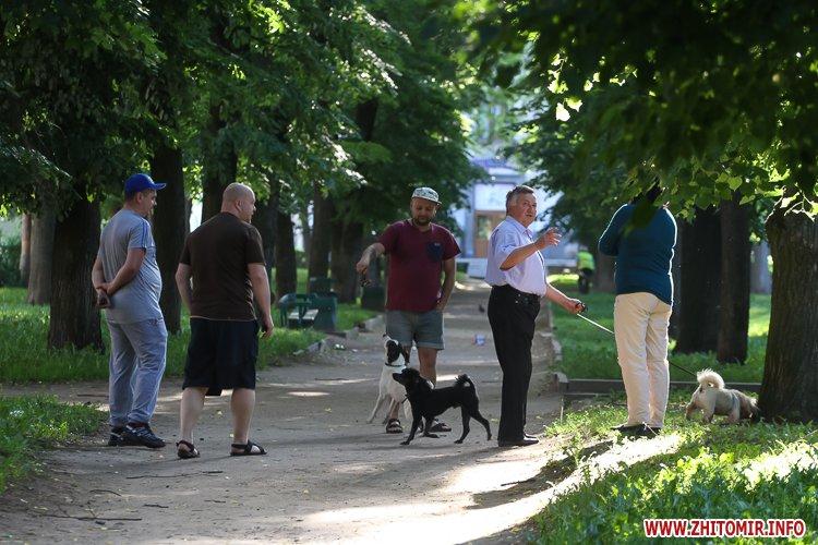 Vigyl sobak 20 - Яких собак вигулюють зранку житомиряни на Крошні, в сквері та парку. Фоторепортаж