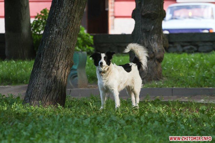 Vigyl sobak 21 - Яких собак вигулюють зранку житомиряни на Крошні, в сквері та парку. Фоторепортаж