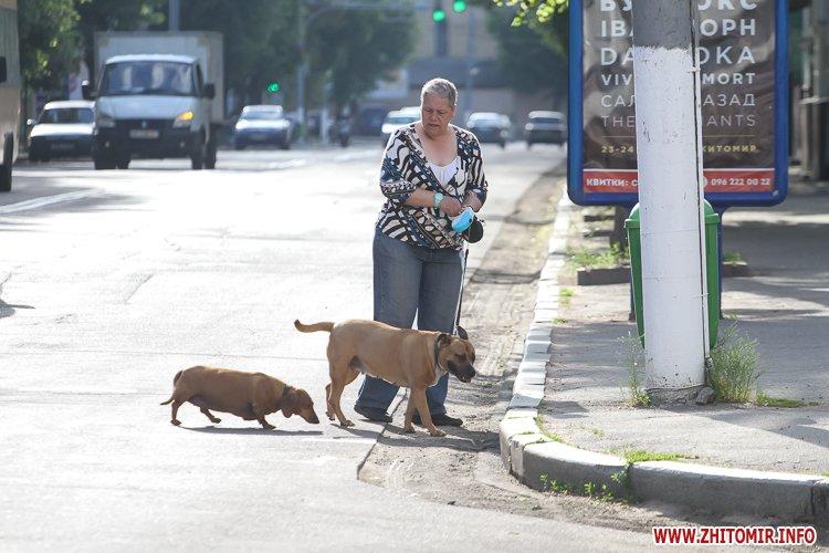 Vigyl sobak 22 - Яких собак вигулюють зранку житомиряни на Крошні, в сквері та парку. Фоторепортаж