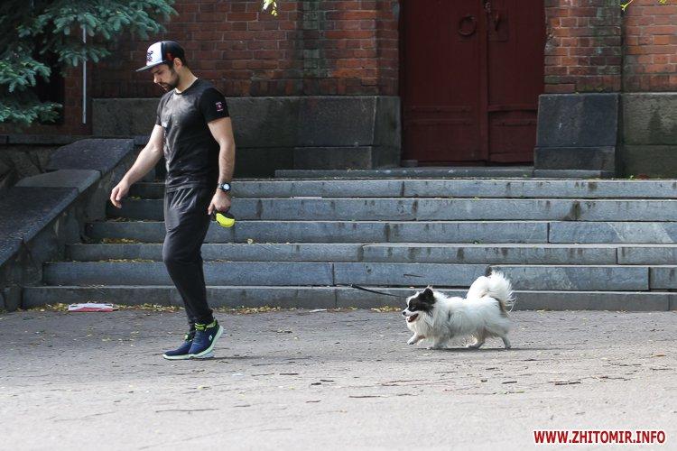 Vigyl sobak 23 - Яких собак вигулюють зранку житомиряни на Крошні, в сквері та парку. Фоторепортаж