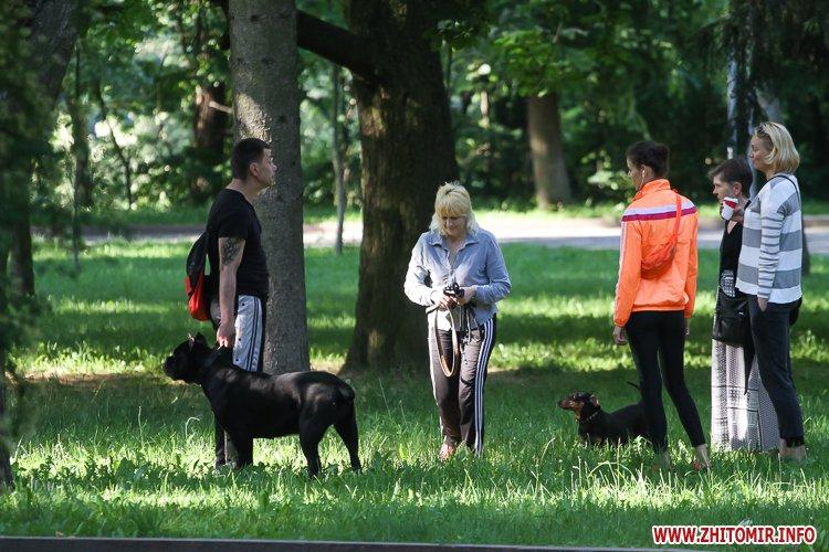 Vigyl sobak 24 - Яких собак вигулюють зранку житомиряни на Крошні, в сквері та парку. Фоторепортаж