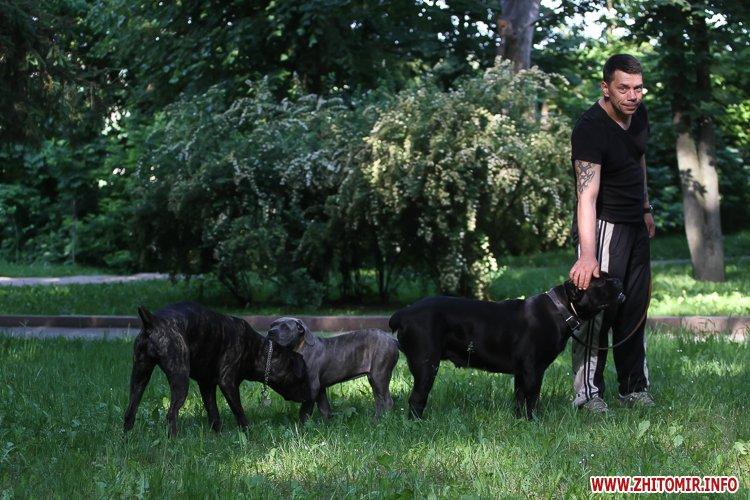 Vigyl sobak 27 - Яких собак вигулюють зранку житомиряни на Крошні, в сквері та парку. Фоторепортаж