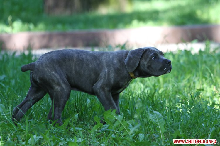 Vigyl sobak 31 - Яких собак вигулюють зранку житомиряни на Крошні, в сквері та парку. Фоторепортаж