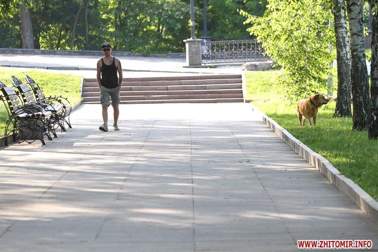 Vigyl sobak 32 - Яких собак вигулюють зранку житомиряни на Крошні, в сквері та парку. Фоторепортаж