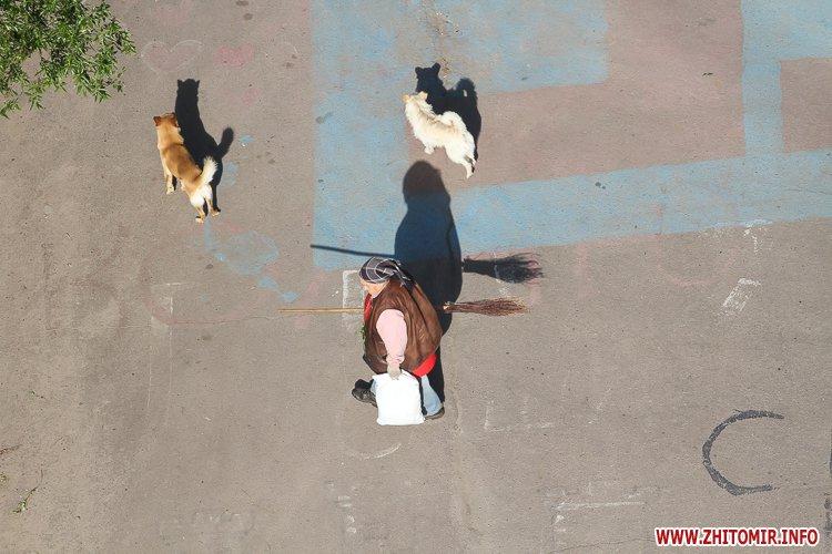 Vigyl sobak 33 - Яких собак вигулюють зранку житомиряни на Крошні, в сквері та парку. Фоторепортаж