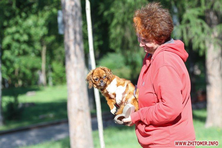 Vigyl sobak 34 - Яких собак вигулюють зранку житомиряни на Крошні, в сквері та парку. Фоторепортаж