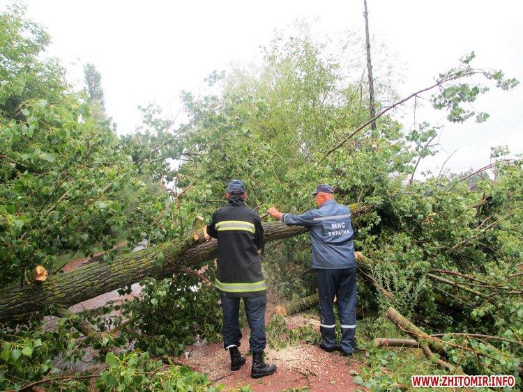 naslidki negoda 1 - Наслідки негоди: у Баранівці дерево впало на дах будинку, а в Пулинському районі – на дорогу