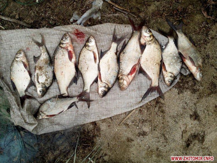 ruboohorona patryl 2 - За 10 днів Житомирський рибоохоронний патруль вилучив на ринках майже 70 кг незаконно добутої риби