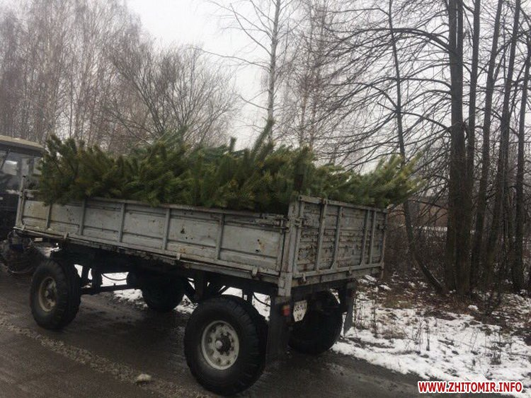 5a3cb67eb9c6e - Житомирські екологи впіймали «підприємців», які трактором перевозили зрубані для продажу сосни