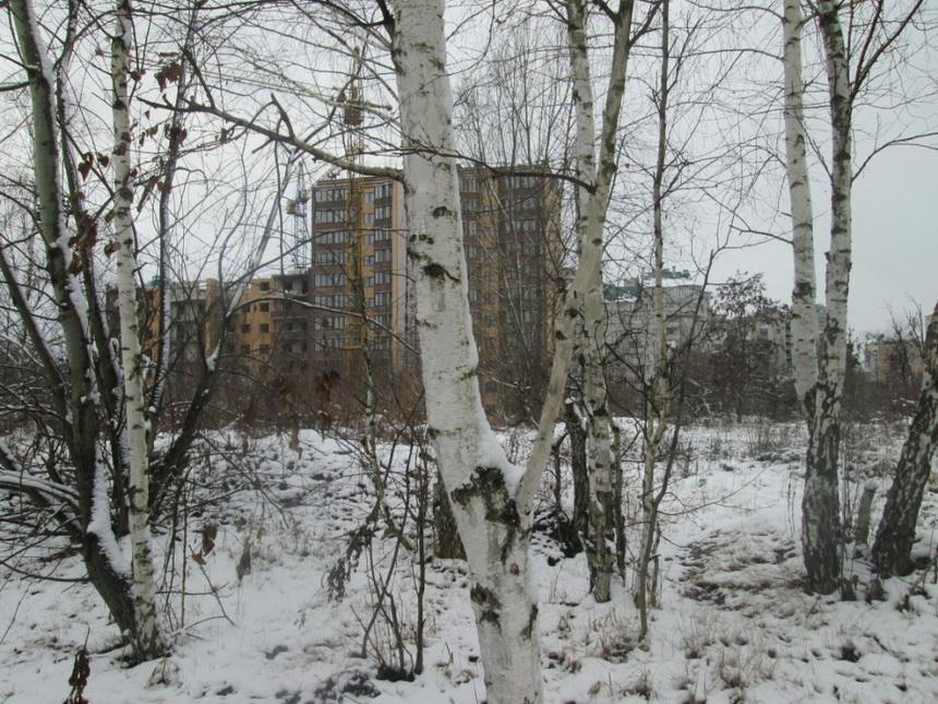 Застройщик в Житомире вырубит 300 деревьев на Корбутовке