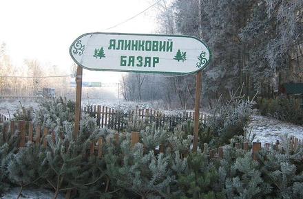 908c0069ede007e276f11d8dcfff9958 preview w440 h290 - Лісівники Житомирської області підготували на продаж півмільйона новорічних дерев