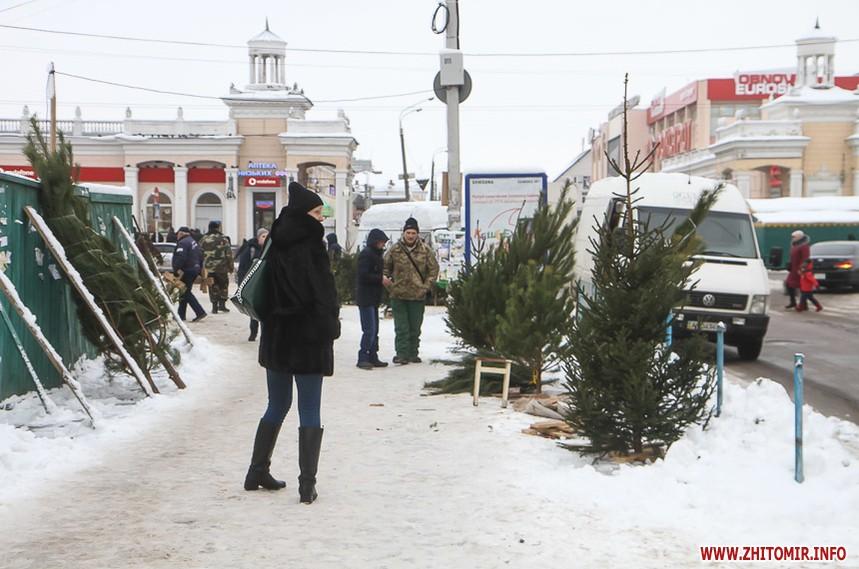 Купити ялинку в Житомирі на базарі