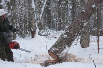 b6b1987f285986d59363eafa0df034ef preview w440 h290 - Під час валки дерев у Житомирській області загинув 56-річний селянин