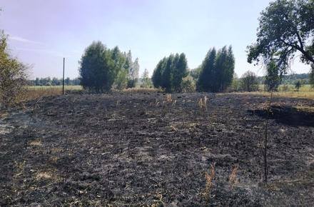 8ba5184158f40831fb9dc99b7c37c66a preview w440 h290 - Палії сухої трави у Житомирській області знову ледь не наробили лиха: вогонь дістався до цвинтаря