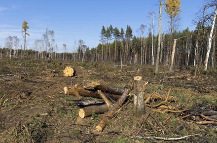 5df05ae44ff05bc95238d4e52e994985 preview w440 h290 - У Житомирській області дерево вбило 34-річного чоловіка