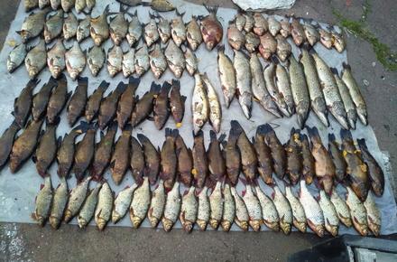 8526889c6c71cad7618231ad3bc21116 preview w440 h290 - На Тетереві житомирські прикордонники затримали браконьєра, який ловив рибу 18-ма сітками