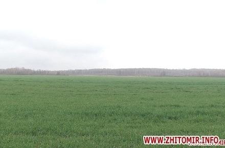 eb18ac77fb8b28b106305956a9d5420f preview w440 h290 - Селищна рада у Житомирській області віддала фермеру «не свої» 330 га землі
