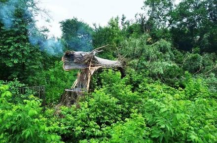 8b59e95036a133d98d3b86bb79695006 preview w440 h290 - У Житомирській області негода залишила без світла 72 населених пункти, а блискавка «підпалила» дерево