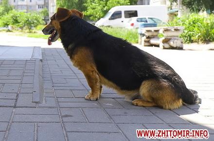 de6a7288cc980191dd8e36837195692e preview w440 h290 - У Житомирській області оштрафували чоловіка, який стріляв з пневматичної зброї і влучив у собаку