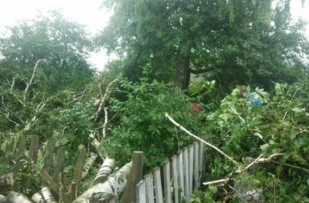 388bb827715028adeb87ea12a5d736fb preview w440 h290 - Через негоду в Житомирській області без світла лишились 99 населених пунктів, а рятувальники прибирали з доріг дерева